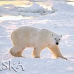 Alaska Arctic National Wildlife Refuge