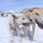 Alaska dogsledding