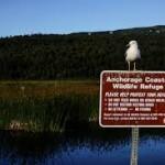 Anchorage Coastal Wildlife Refuge