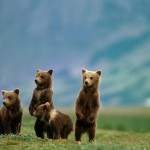 Alaska Katmai National Park and Preserve