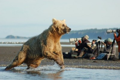 Alaska McNeil River State Game Sanctuary