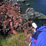 Alaska Walrus Islands State Game Sanctuary